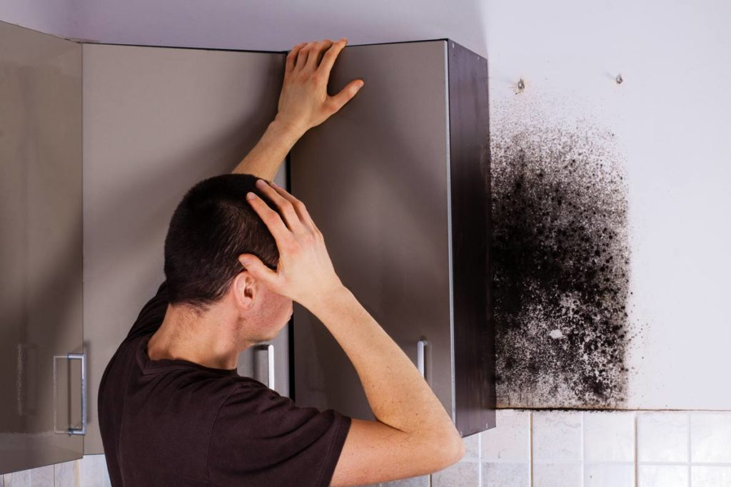 Mold Inspection Services-South Florida Mold Remediation & Water Damage Restoration Services-We offer home restoration services, water damage restoration, mold removal & remediation, water removal, fire and smoke damage services, fire damage restoration, mold remediation inspection, and more.